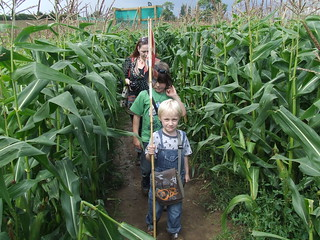 Maize Maze (4) | by theaardvark