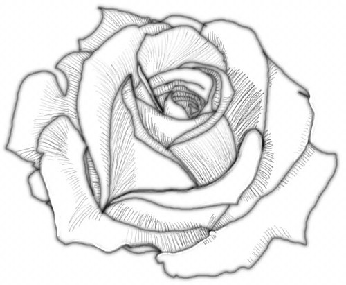 How to Draw a Rose | Flickr