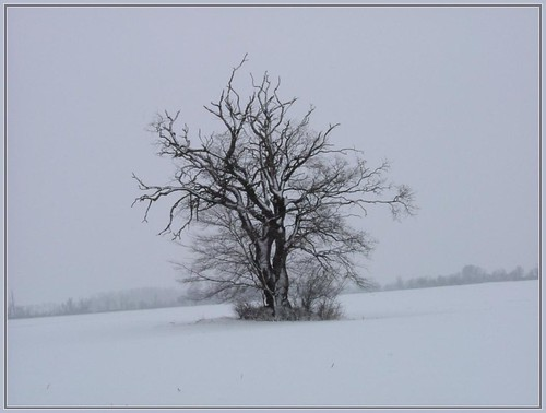 Once in winter... | by katka.szabo