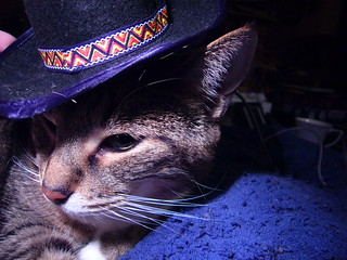 Cat in a hat | by Sarah G...