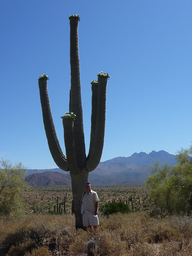 Tours From Phoenix To Flagstaff