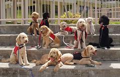 Seizure Dog Training Near Me