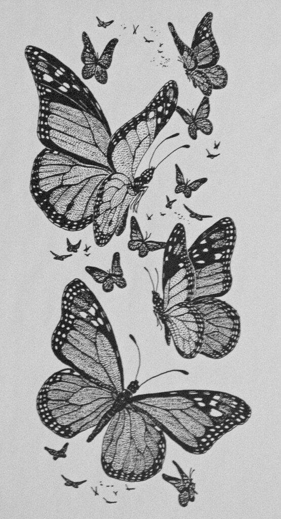 drawing monarch butterflies a pen ink drawing done for flickr