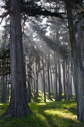 trees in the presidio | by Sam Hay