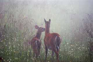 doe and fawn | by abennett23