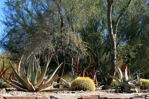 Desert Botanical Garden The Desert Has It 39 S Own Beauty