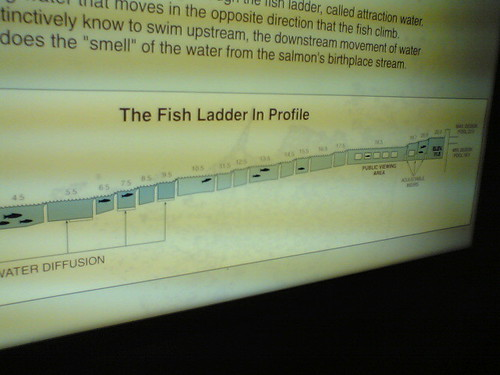 fish ladder diagram ingenious system ario flickr. Black Bedroom Furniture Sets. Home Design Ideas