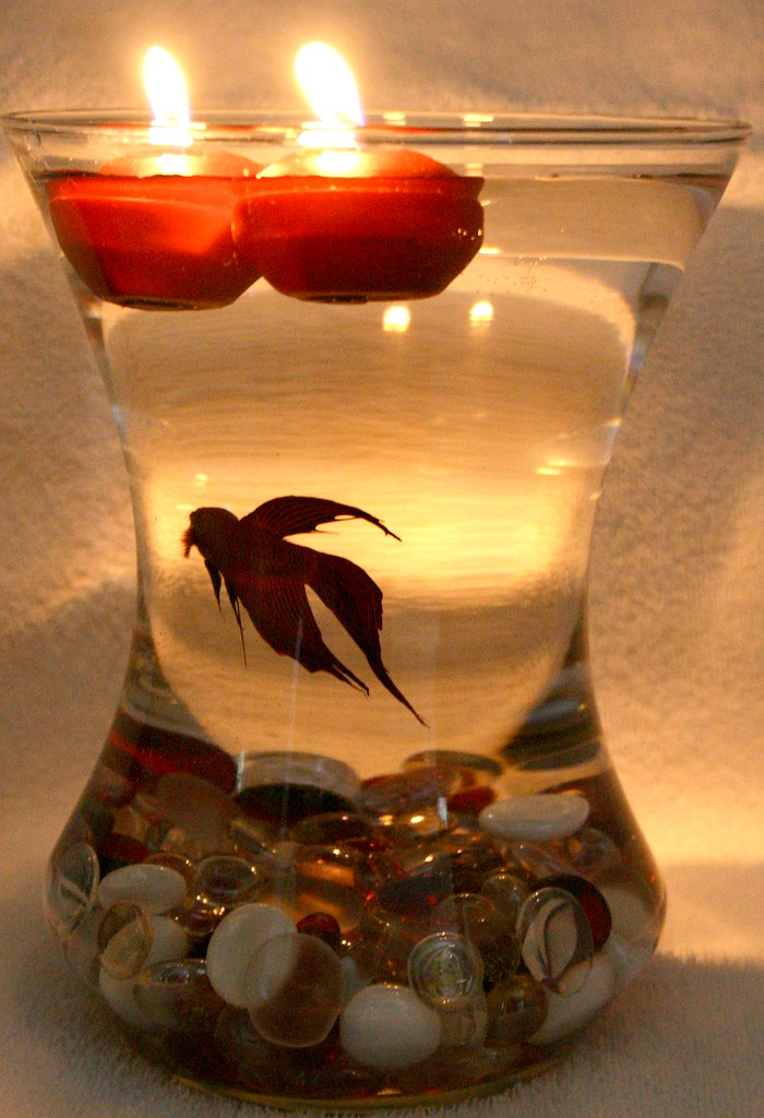 Beta Fish Bowl Wedding Reception Centerpiece | I have decide… | Flickr