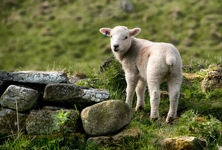 Lamb by Broken Wall | by Jonnyfez