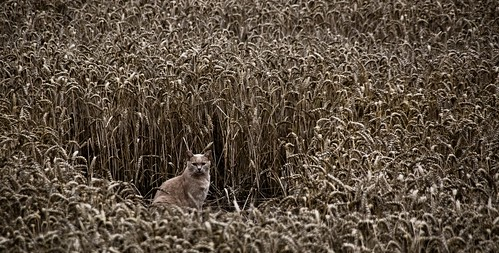 Camouflaged Cat | by J e n s