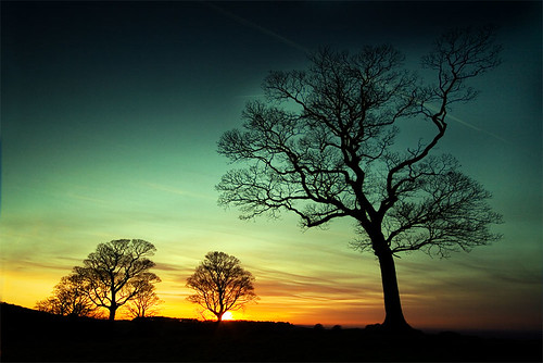 lyme trees | by Martin Lowery