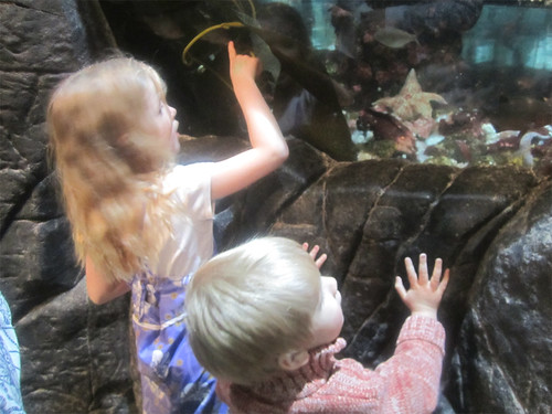 Checking out the sea stars and anemones | by AmberStrocel