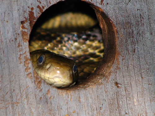 Snake in the bird house | by amblin