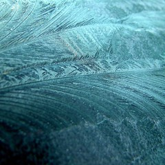 Frost patterns | by tina negus