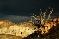 Twisted Tree in the Badlands | by jwoodphoto