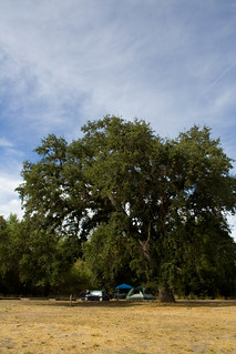 Our Campsite and the Giant Oak | by wendy crockett