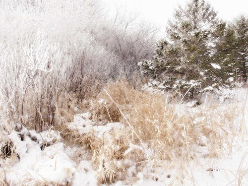 Winter Scene Near Butterfield, MN | by Dave Linscheid