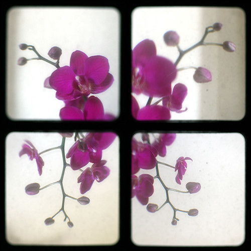 4 orchids | by grittypix