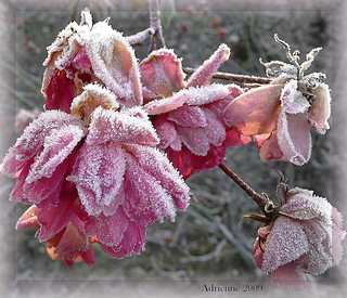 winters in pink! | by ♥Adriënne - catching up......