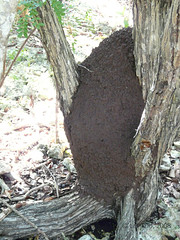 Termite Mound | by Lev Frid