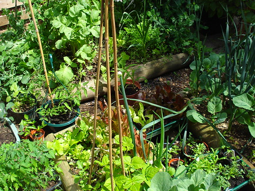 My vegetable patch | by allispossible.org.uk