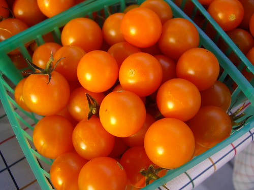 Sungold Tomatoes | by swampkitty