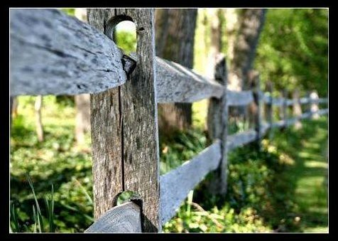 Fence | by vintod