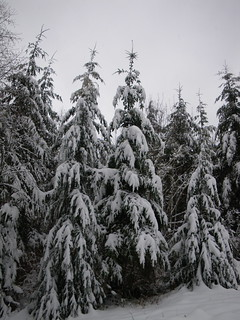 snowy trees | by red alder ranch