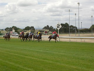 Coming into the Home Straight - Race 1 - Cranbourne Racing Christmas Carnival | by avlxyz