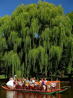 Boston Public Gardens - Swan Boat & Weeping Willow Tree | by David Paul Ohmer