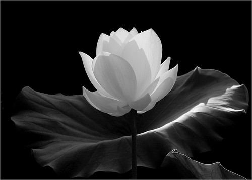 Flower | by Bahman Farzad