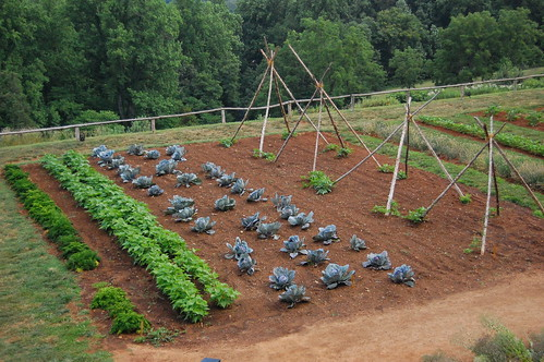 vegetable garden, detail | by Southern Foodways Alliance