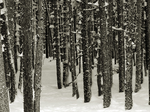 winter woods | by Amanda's Weekly Zen