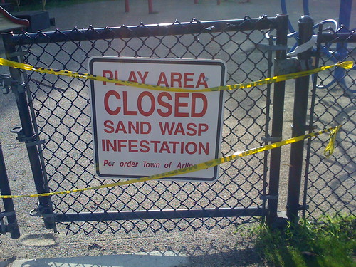 how to get rid of sand wasps