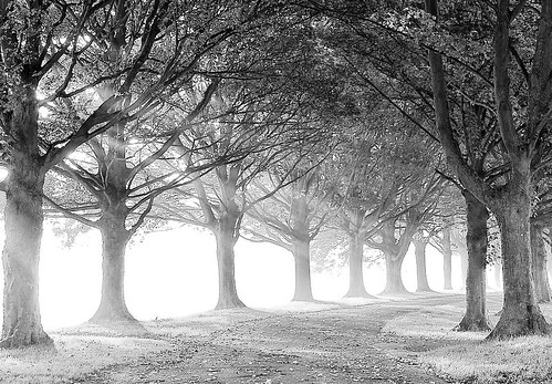 Black and White Avenue | by algo