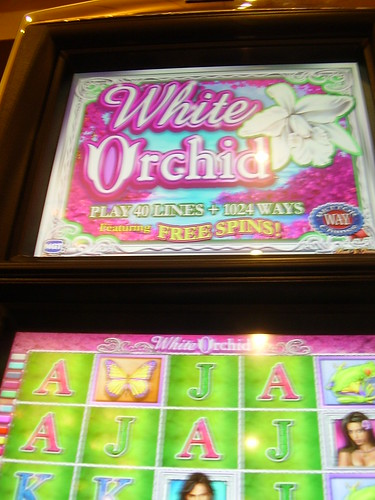 Wild Orchid Slot