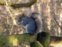 Squirrel - St Clement's Church Knowlton Kent | by Paul @ Doverpast.co.uk