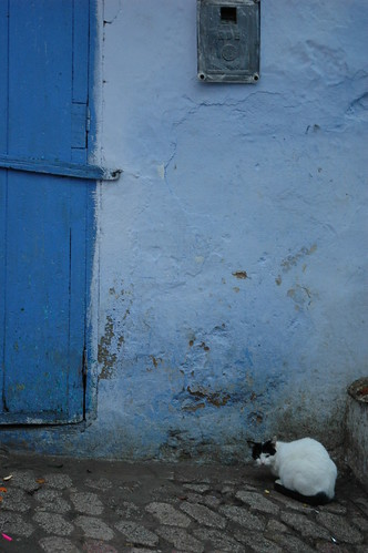 a cat in a blue town | by minachom