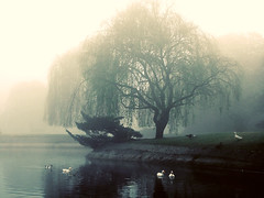 Weeping Willow | by Geninne