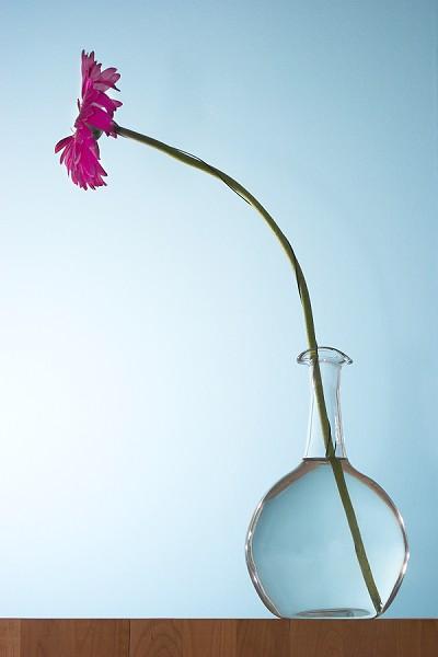 One Flower In A Vase One Flower In A Vase Nordicphotos Flickr