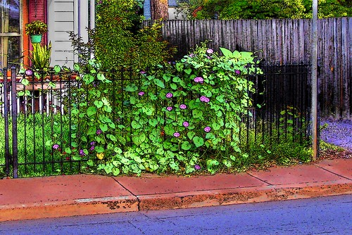 SIDEWALK GARDEN | by lewsviews