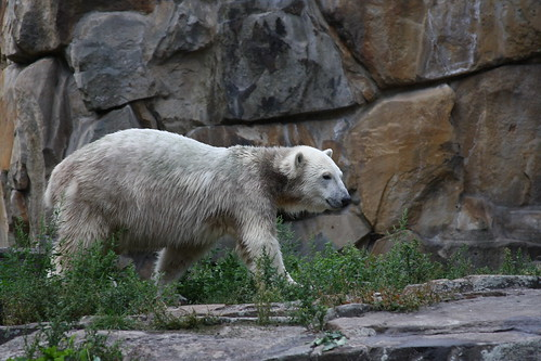 Knut | by Seabamirum