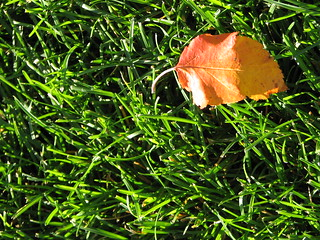 leaf 2 | by A writer afoot