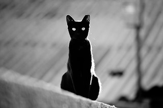 place in the sun for a black cat | by Victor Bezrukov