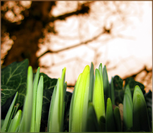 Green Shoots | by innpictime ζ♠♠ρﭐḉ†ﭐᶬ₹ Ȝ͏۞°ʖ