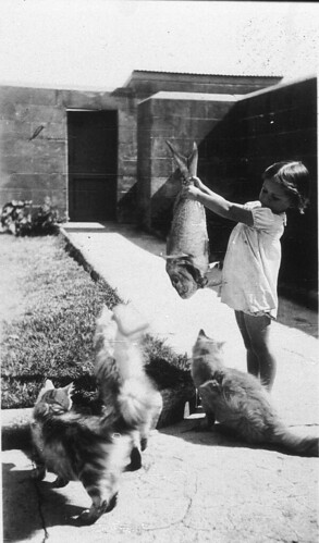 Cats' food didn't come out of a can and it was nothing but the best fish - Pt Perpendicular, c 1936 / by Mrs Tulk | by State Library of New South Wales collection