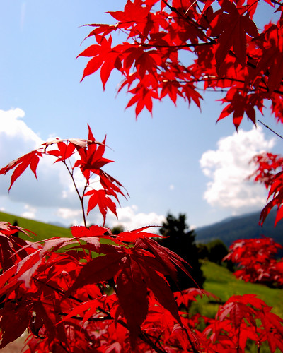 Red leaves of summer in the Austrian Alps | by Peace Correspondent