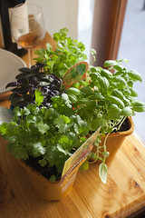 Baby Herbs | by Abstract Gourmet