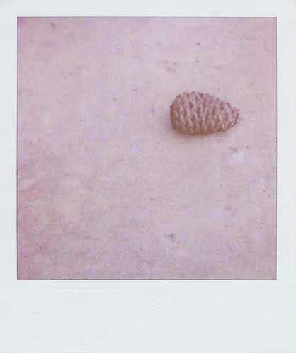 lone pinecone | by scissorspaperglue