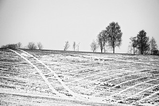 Winter field in B&W | by Breivold's